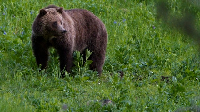 Lady Wrangler Saves Boy From Charging Bear
