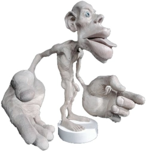 How your brain sees your body: Meet the cortical homunculus