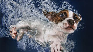 There's <em>NOTHING</em> cuter than these puppies swimming underwater