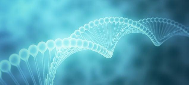 Un nuevo algoritmo reconoce secuencias de ADN en tiempo récord: 5 horas