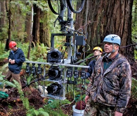 Custom Camera Rig Allows For a Stunning Vertical Panorama of a Giant Redwood