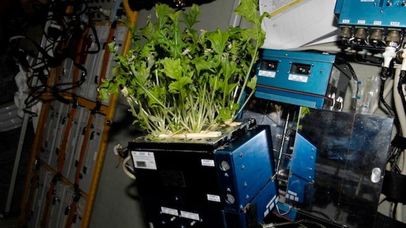 Plants don't need no stinkin' gravity