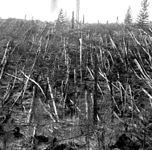 The Cloud That Proved The 1908 Tunguska Explosion Was A Comet