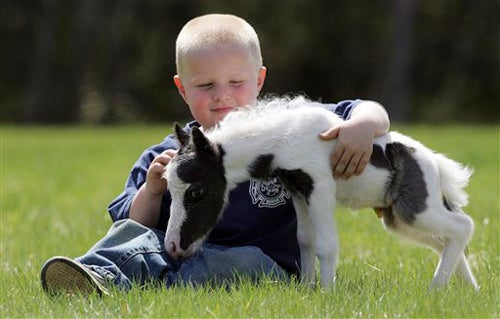 This Is The World's Smallest Horse