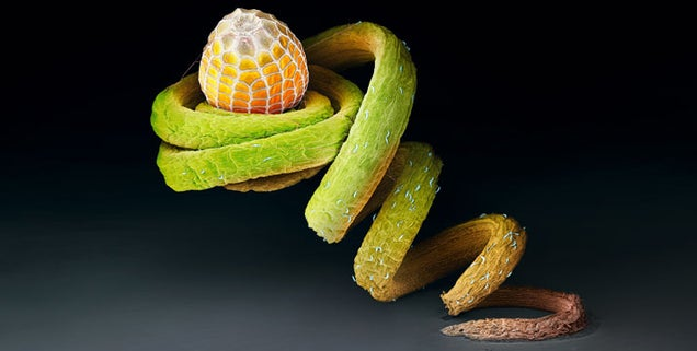 Extraordinary eggs and caterpillars are as beautiful as the butterflies