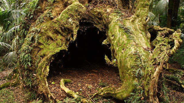 Lost Mushroom Foragers Survived Like Tree Elves