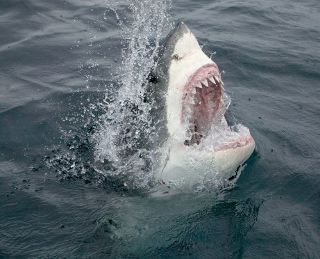 Expert Predicts Increase in Shark Attacks This Year, but There's Still More Reason to Fear Pretty Much Everything Else