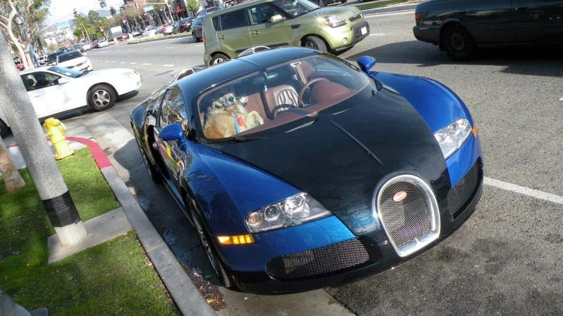 This Puppy Gets Chauffeured Around In $1.6 Million Bugatti