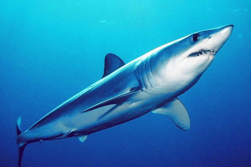 Scientists Finally Understand Shark Skin, Thanks to 3D Printers