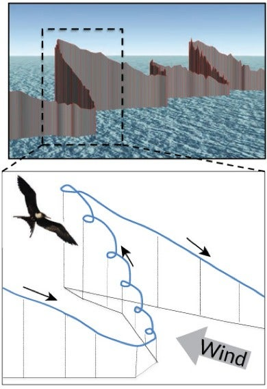How Migrating Birds Can Soar To Such Great Heights