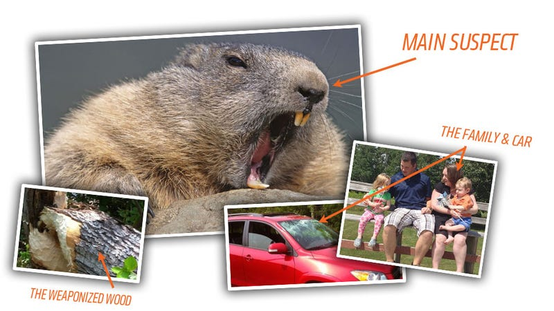 Evil Beaver Attempts To Kill Family By Dropping A Tree On Their Car