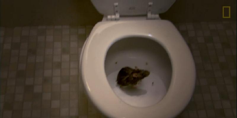 smotret-besplatno-onlayn-skritaya-kamera-zhenskiy-tualet