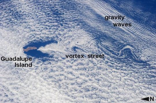 Vortices Trailing Guadalupe