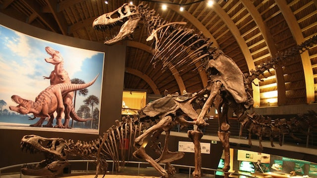 This Boning Dinosaur Skeleton Exhibit Is Proof that American Museums Are Too Prudish