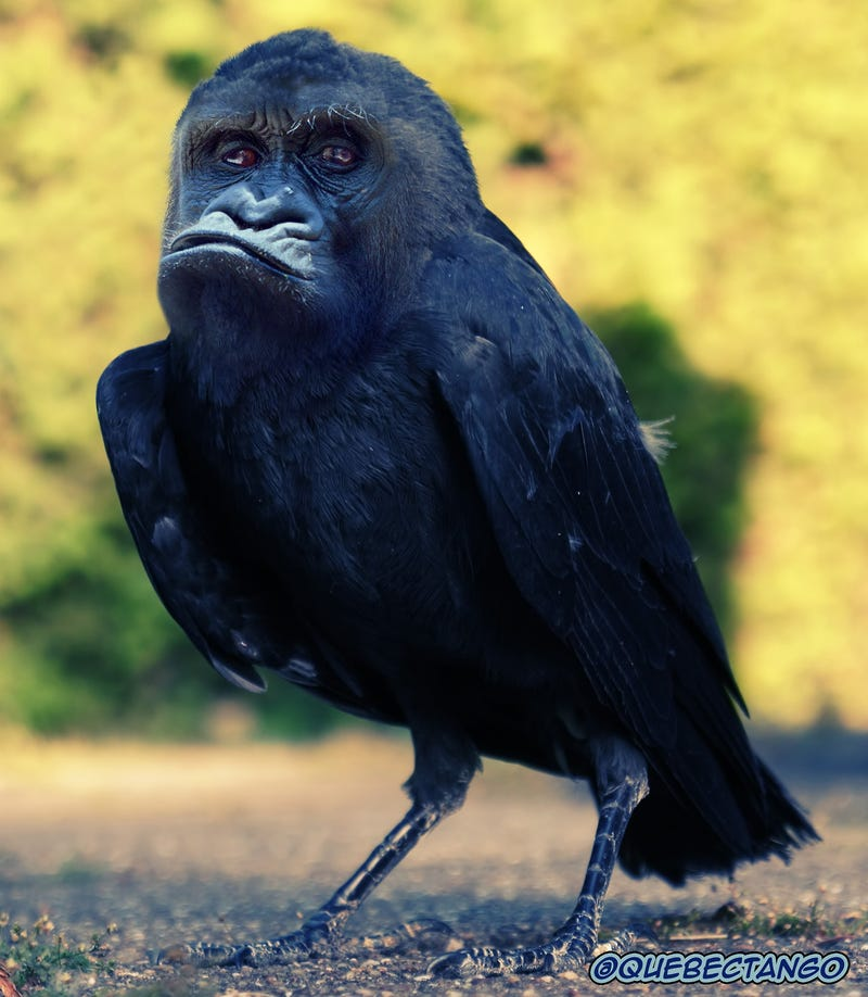 Yikes, these animal hybrids are so hilariously terrifying