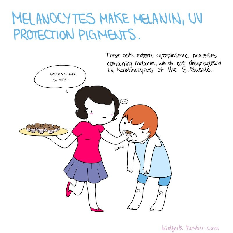 Learn the basics of cell biology with these adorable science comics