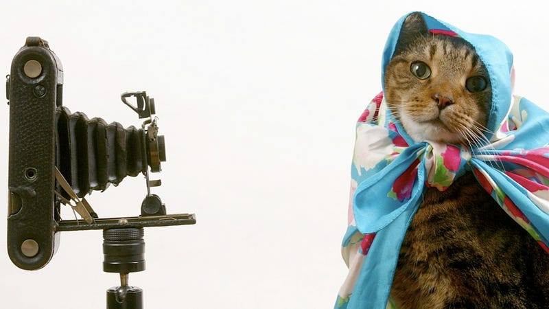 There's a Cat Video Exhibit at a Minneapolis Art Museum and It Sounds Glorious