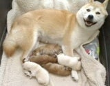 Puppy Cam: The Second Generation Has Arrived