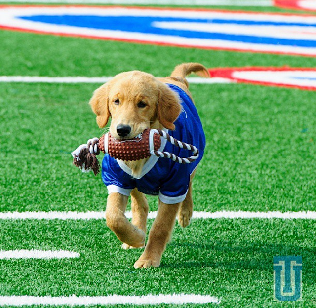 Tulsa's Puppy Mascot Will Be The Best Part Of College Football Season