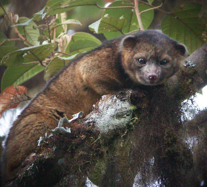 Your Wish Was Granted, Adorable New Mammal Species Discovered