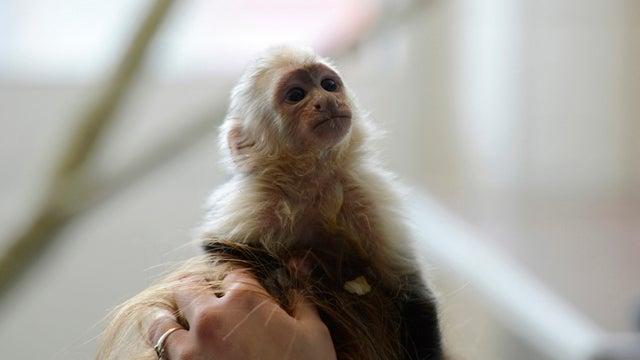 Justin Bieber's Monkey Still Languishing in a German Prison