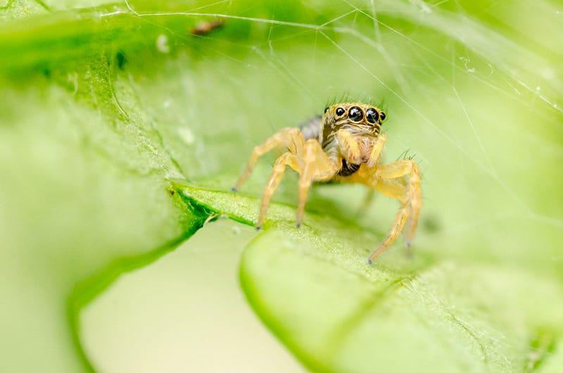 75 Close-Ups Of Bugs