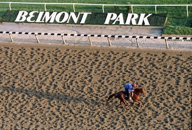 Someday Belmont: The Making Of A Race Horse