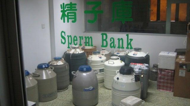 College Guys Donating Sperm Are Modern-Day Genghis Kahns