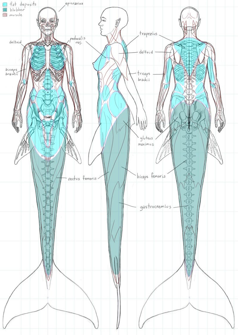 A Gorgeous Dissection of Mermaid Anatomy