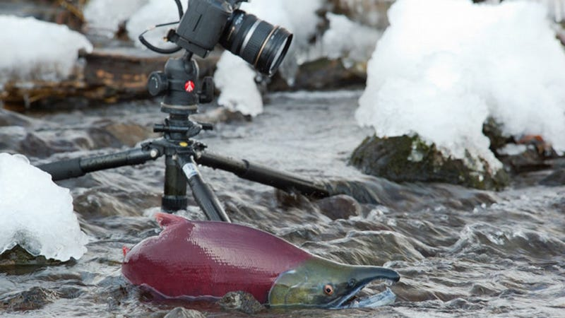 How to Get Awesome Wildlife Photos, Colds and Broken Cameras