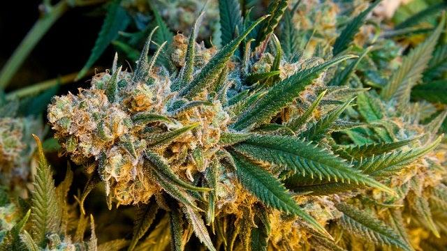 how to grow weed indoors reddit