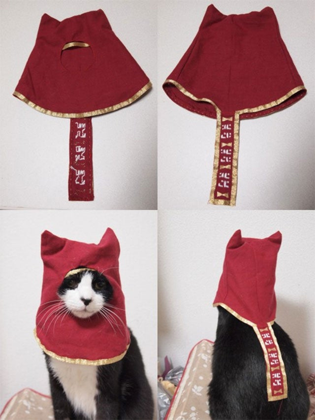 Journey, Now Available for Cats