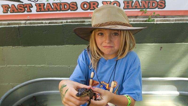 Budding Alligator-Wrangler Makes Totally Appropriate Face