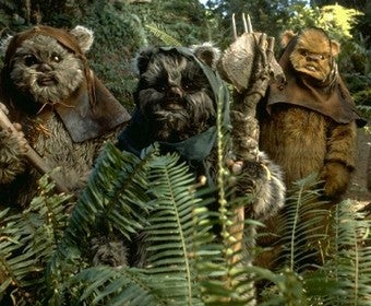 "Transgender Rights Mean Letting People ""Dress Like Ewoks"""