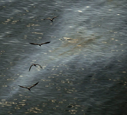 BP's Oil Well Nears Killing Stage