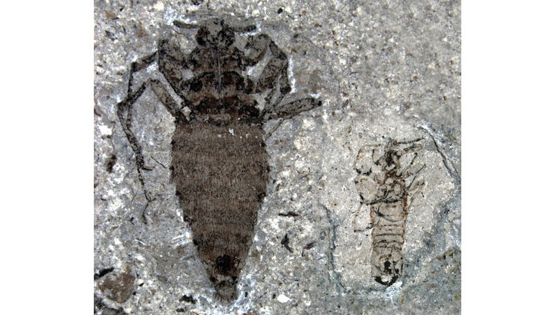Prehistoric Fleas Would Probably Eat Your Dog If They Still Existed