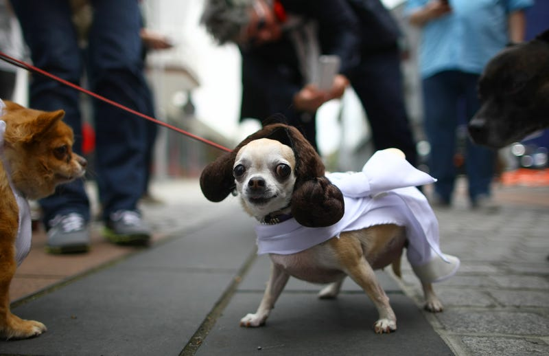 The Absolute Cutest Dog Cosplay of All Time