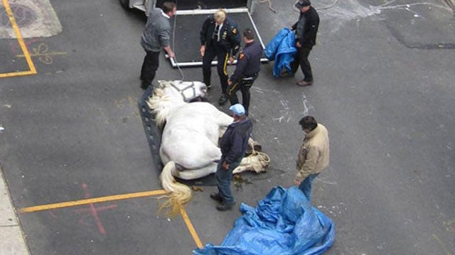 New York Carriage Horse Drops Dead on 54th St.
