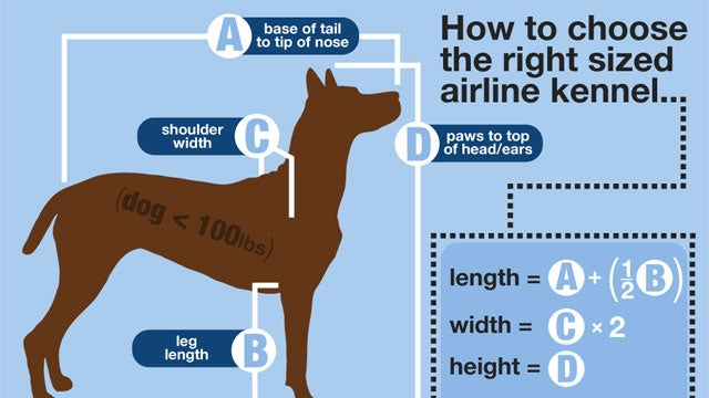 What to Do and What to Avoid When Traveling with Your Pet