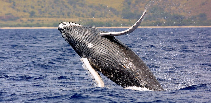 How Whales Will Save The World – If We Let Them