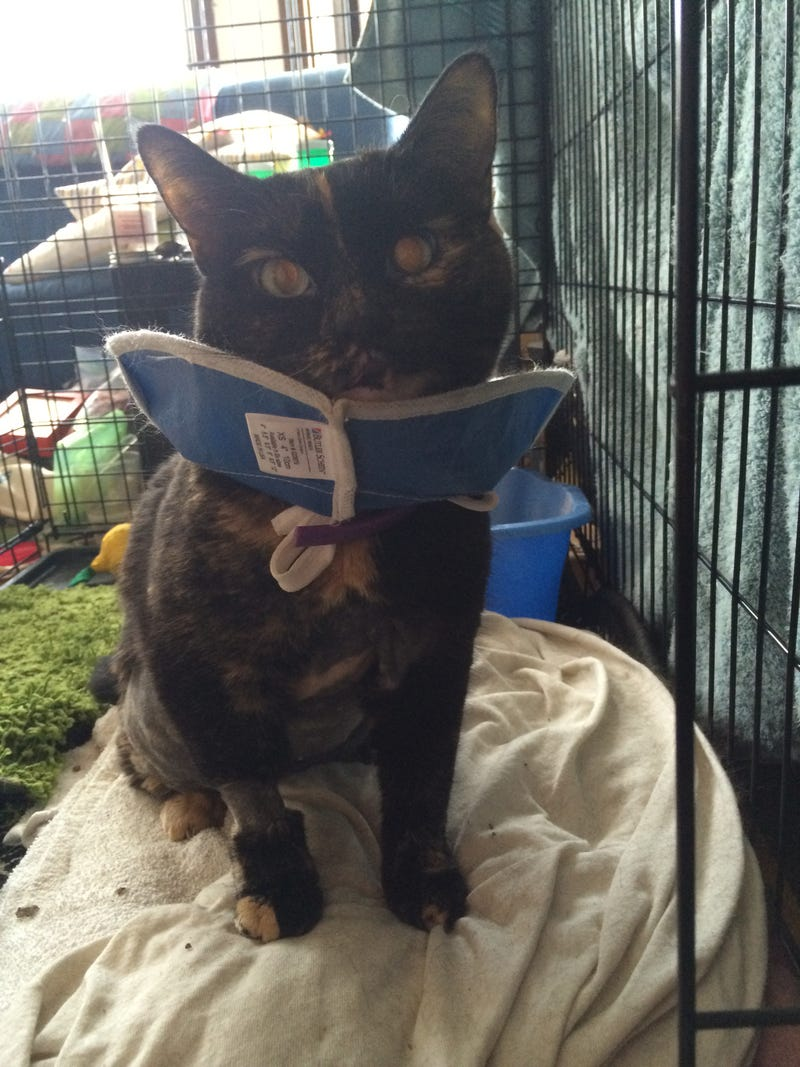 Cancer Cat partial update: tumor results