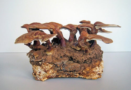 From Mushrooms to Mansions: Organic Building Materials