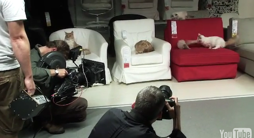 "IKEA Let Loose a Herd of 100 Cats Into Store to ""See What Happens"""