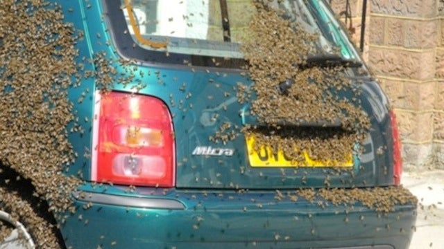 Student's Car Turns into Nightmare with Addition of 20,000 Bees