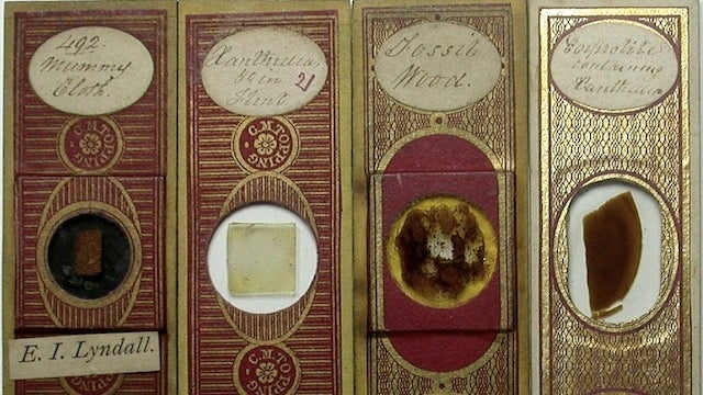 Even Victorian microscope slides were beautifully ornate