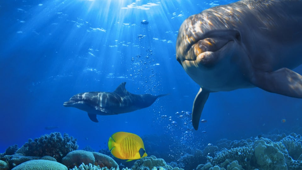Could Humans Have Evolved From Dolphins? - photo#42