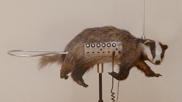 Taxidermied badger and theremin combine to make the world's weirdest musical instrument
