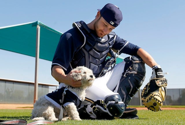 The Milwaukee Brewers' Adopted Stray Dog Is The Best Dog