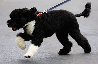 President Obama Needs To Be Consistent (With His Dog)
