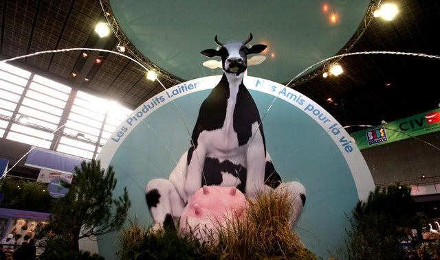 Test Tube Cows Produce 'Human-Like Milk'